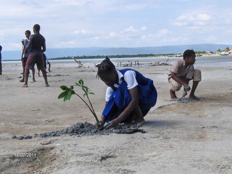 mangrove_planting